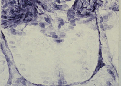 <i>Cheryl Cross, Montreal</i>,    1999, ink on paper, 1 1/2' x 3 1/2'